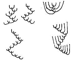 Feather Diagram v2 06